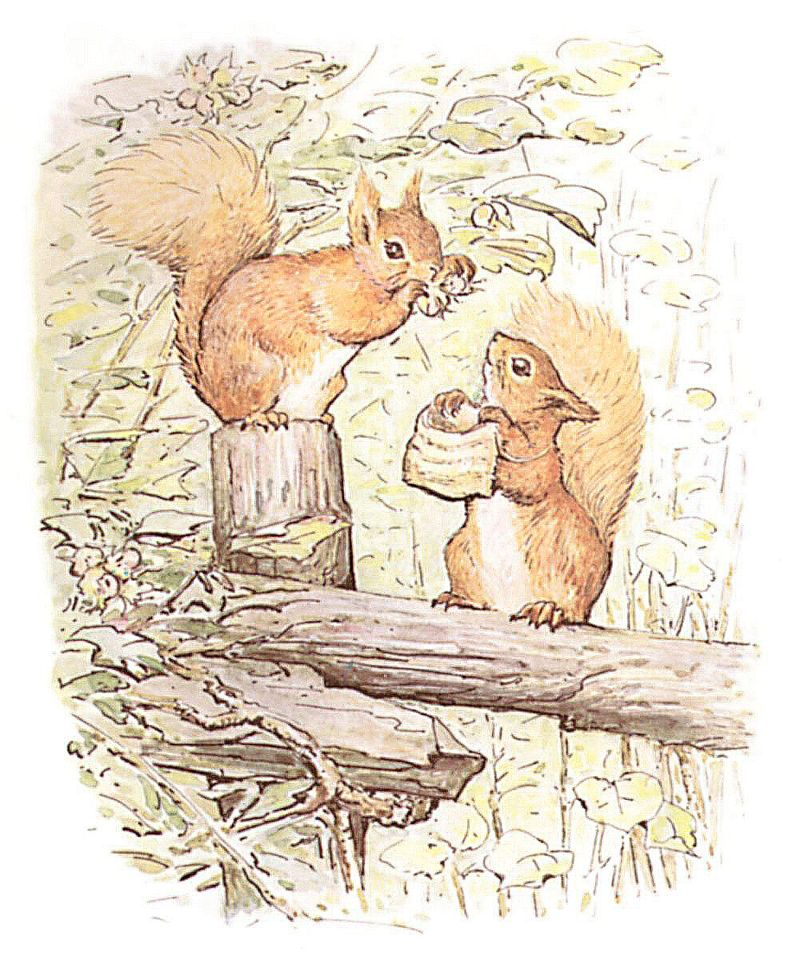 squirrels with nuts. Squirrels store nuts in tree